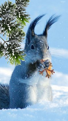 We don't resharing any photos here from other communities. Any member can publish 5 photo in a day and we publish animals photos only Happy Animals, Animals And Pets, Cute Animals, Winter Pictures, Christmas Pictures, Christmas Scenery, Types Of Animals, Cute Animal Photos, Snow Scenes