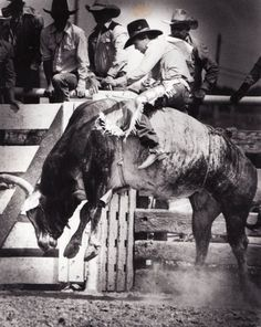 LANE FROST  on Takin' Care Of Business in Cheyenne, Wyoming 1989 - the last bull he would ever ride. (rip)