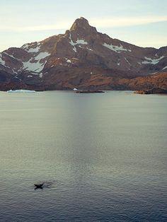 Tasiilaq #Polhem #Whale # East Greenland # Photo by Ulrike Fischer