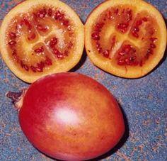 succo di pomodoro albero e guatila per dimagrire