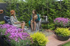 Lavandula pedunculata 'The Princess' Mixed Border, Border Plants, Lavandula, Garden Images, Garden Inspiration, Make It Simple, Looks Great, Australia, Landscape