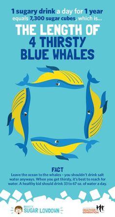 Sugar whales