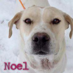Available for adoption through P.o.e.t animal rescue.