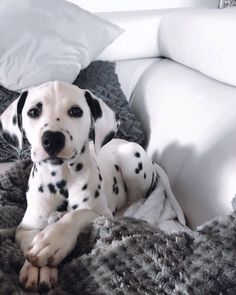 Cute Baby Dogs, Cute Dogs And Puppies, Pet Dogs, Doggies, Funny Puppies, Weiner Dogs, Beautiful Dogs, Animals Beautiful, Animals And Pets