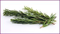 Rosemary Essential Oil Profile includes uses, constituents, aromatic description, extraction method, latin name, safety info and references.