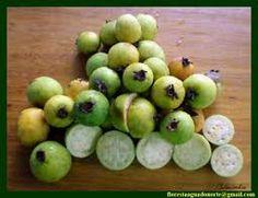 Quintal de casa, frutas que tenho aqui, araçá