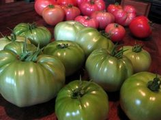 Tips for ripening tomatoes indoors + links to tomato info @agardenforthehouse.com