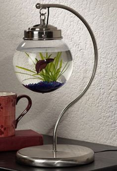 Hanging fish tank - could easily be made with a banana hanger and a ceiling light set from a home improvement store; would be fun as a snow globe or terrarium, too.