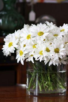 Esta delicada flor também representa a pureza, a paz, a bondade e afeto. É uma flor que combina muito bem com outras, e por isso é comum vê-la juntamente com outras em arranjos florais, transmitindo uma sensação de jovialidade.