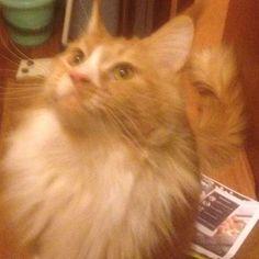 eiendom_malaga#cats #gatasdoinstagram #gatas #katze #katt #katzen #кошки #кошка #коты