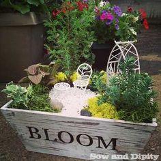 Hometalk   Fairy Gardens :: Francine C's clipboard on Hometalk