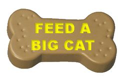 Click here to feed a big cat. One free click everyday helps to feed a big cat