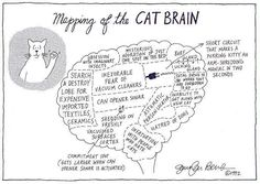 Mapping of the Cat brain