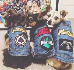 These adorable Custom Denim Vests for Dogs are so unique and they are perfect pooch wear that you furbaby will love. You will love this amazing street wear.