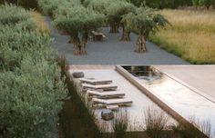 Mediterranean landscaping. olive trees