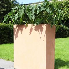 Jardinière Lechuza Balconissima anthracite + supports ...