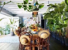 Idea for under patio along house- potted palms to add height and block under house view
