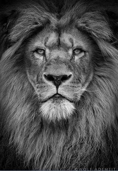 Lion of Judah, lamb of God