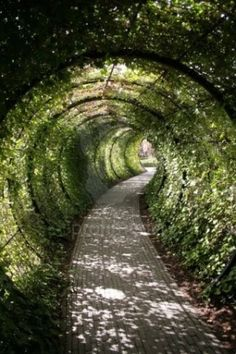 green clandestine path