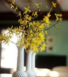 Forsythia in vintage milk glass hobnail vases...inspiration for Christine's baby shower arrangements!