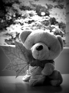 "Interesting Fact About Teddy Bear: ""A person who collects teddies or is fond of them is known as an Arctophile."" :)   #teddybear #teddies #childhoodcompanion #cute #blackandwhite #leaf"