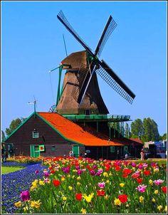 Pays-Bas - moulin