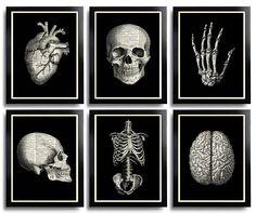 Skull Print, Anatomical Poster Set Anatomy Print Set of 6 Medical Wall Art Skull Art Print Gift Poster Set Gift for Him Vintage Anatomy 110 Tardis, Art Mural, Wall Art, Anatomy Art, Human Anatomy, Poster Vintage, Flower Wall Decor, Art For Art Sake, Skull Print