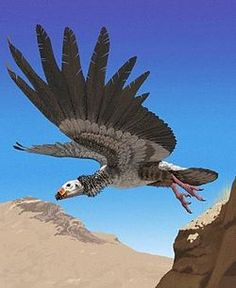 Argentavis Magnivicens. The estimate span was 7 – 7.5 m, height ca. 1.5 m and the mass approx. 72 kg. One of the largest flying birds known to science, certainly the heaviest bird known to have flew.