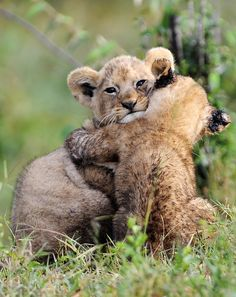 Cute little cubs