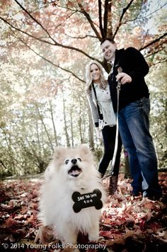 85 best dog save the date photo ideas images on pinterest