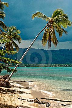 Palmtrees, beach, mountains... ♡  Samaná DR