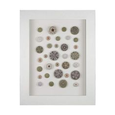 """View the Dimond Home 168-003 Sea Urchin 39""""H X 31""""W Framed Wall Decor at Build.com."""