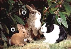 European stuffed rabbits from $58