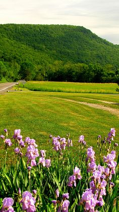 Skidmore Mountain - Pendleton County, West Virginia    It is assumed that this mountain was named after John Skidmore.