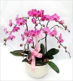 Toko Bunga Taman Palem Lestari Buy Flowers Online, Cheap Flowers, Tree Branches, Bonsai, Orchids, Art Pieces, Plants, Wedding, Jakarta
