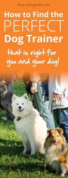 How to Find a Dog Trainer that is Right for You and Your Dog. Do you know there are several different techniques in dog training? How do you choose...