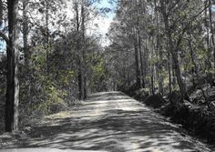 Lefay Gravel Road on the Way to Sandy Creek Camping Grounds - Kilcoy, SE Qld New York State Parks, Rock Pools, Sunshine Coast, Family Dogs, Go Camping, Dog Friends, Places To See, To Go, Wildlife