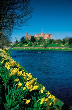 Looking across the River Ness to Inverness Castle, Inverness, Scotland. Scotland is covered with daffodils! They even grow wild along the roadsides, in pastures and fields, and along river bands. Inverness Castle, Inverness Scotland, Castle Scotland, England Ireland, England And Scotland, Great Places, Places To See, Beautiful Places, Monuments