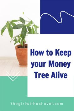 Is your money tree looking a bit sad?! Here's how to keep it alive! See exactly what your plant wants so that you can make sure that you are giving it what it needs with these Money Tree Plant Care Tips! Money Tree Plant Care, Apartment Plants, Best Indoor Plants, Money Trees, Low Lights, Houseplants, Apartments, Sad, Healthy