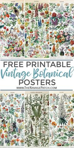 Amazing FREE Vintage Botanical Prints - - These gorgeous FREE Vintage Botanical Prints by famed natural history illustrator Adolphe Millot are perfect for a farmhouse gallery wall! Vintage Botanical Prints, Vintage Art Prints, Botanical Art, Botanical Posters, Vintage Art Posters, Vintage Wall Art, Botanical Flowers, Illustration Botanique Vintage, Vintage Botanical Illustration