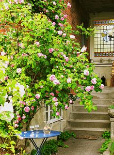 Klatreroser er fantastiske til at skabe liv i haven og dække grimme hegn eller en rå mur. Vil du give din have et mere romantisk udtryk, bør du vælge slyng- eller klatreroser, som tilfører masser af farve og duft.