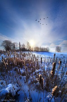 Winter Field ~ Marvelous Nature