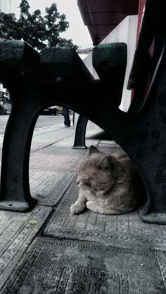 Çatılardan düşmekte kediler,kediler,kediler. O mesafe öldürmez dediler,dediler,dediler