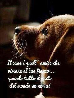 Il cane e' quell'amico che rimane al tuo fianco...Quando tutto il resto del mondo se ne va!