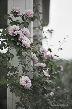 Every beautiful cottage garden has common principles that make them a success. Learn about the fundamentals you need to create your very own cottage garden. Back Gardens, Outdoor Gardens, Garden Design Software, Rose Garden Design, Backyard Ideas For Small Yards, Garden Stand, Garden Care, Gerbera, Raised Garden Beds