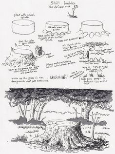 Adron's Art Lesson Plans: Drawing a Picture of a Tree Stump a Skill Builder For a Young Artist.