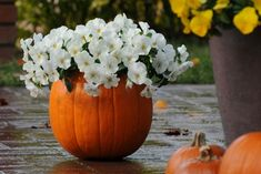 """Terrific Totally Free Pansies fall Tips Pansies would be the bright colored blooms with """"faces."""" Your cool-weather favored, pansies are perfect Garden Mum, Autumn Garden, Planting Bulbs, Planting Flowers, Fall Hanging Baskets, Pansies, Tulips, Prairie Planting, Tulip"""
