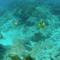 ✨#padangbai #underwater #underwaterworld #clownfish #coral #beautyofnature #underwatervideo #snorkeling #bali #balilife