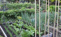 Benefits of Growing a Vegetable Garden