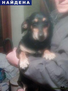 Найдена собака кобель молодой помесь таксы. г.Бердск http://poiskzoo.ru/board/read31698.html  POISKZOO.RU/31698 В г. Бердске возле дома № .. по ул. Красная Сибирь найден молодой кобель помесь таксы.   РЕПОСТ! @POISKZOO2 #POISKZOO.RU #Найдена #собака #Найдена_собака #НайденаСобака #Бердск